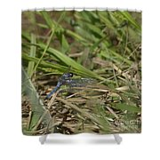 Blue Corporal Dragonfly Shower Curtain