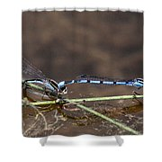 Blue Damsel Shower Curtain