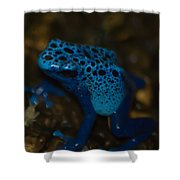 Blue Dart Frog Shower Curtain