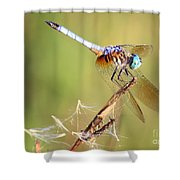 Blue Dasher On Twig Shower Curtain