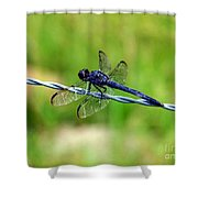 Blue Dragonfly On Barb Wire Shower Curtain