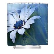 Blue Eyed African Daisy Shower Curtain