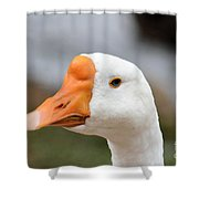 Blue Eyed Goose Shower Curtain