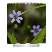 Blue Eyed Grass Shower Curtain