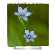 Blue-eyed Grass Wildflower - Sisyrinchium Angustifolium Shower Curtain