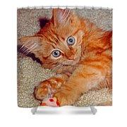 Blue-eyed Kitty Shower Curtain
