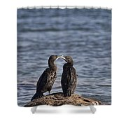 Blue Eyes Kissing Shower Curtain