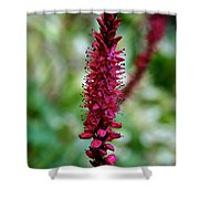Blue Eyes Pink Petals Shower Curtain