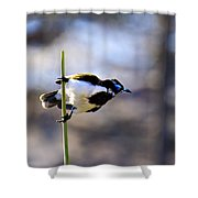 Blue Faced Honey Eater V3 Shower Curtain