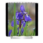 Blue Flag Iris - Dsc03987 Shower Curtain