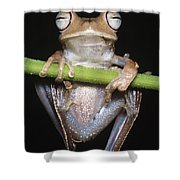Blue-flanked Tree Frog Shower Curtain