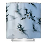 Blue-footed Booby Sula Nebouxii Flock Shower Curtain