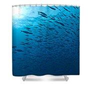 Blue Fusiliers, Similan National Marine Shower Curtain