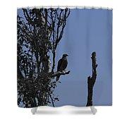 Blue Gray Shower Curtain