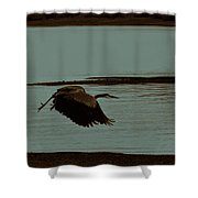 Blue Heron In Flight  Shower Curtain