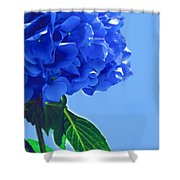 Blue Hortensia Hydrangea Shower Curtain