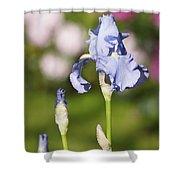 Blue Iris Close Up - Dsc03741 Shower Curtain