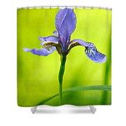Blue Japanese Iris Shower Curtain