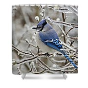 Blue Jay - D003568 Shower Curtain