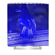 Blue Jay Has The Blues Shower Curtain