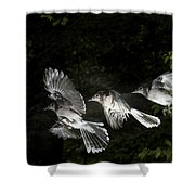 Blue Jay In Flight Shower Curtain