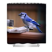 Blue Jay On Backyard Feeder Shower Curtain