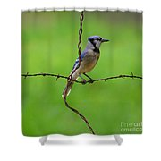 Blue Jay On Crossed Wire Shower Curtain