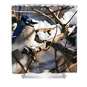 Blue Jay Staying Warm Shower Curtain