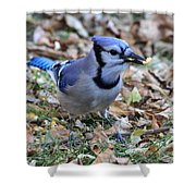 Blue Jay With A Piece Of Corn In Its Mouth Shower Curtain
