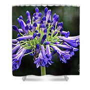 Blue Lily Of The Nile Shower Curtain