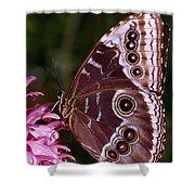 Blue Morpho Butterfly On Flower Shower Curtain