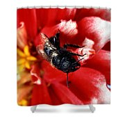 Blue Orchard Bee Shower Curtain