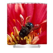 Blue Orchard Bee Shower Curtain by Scott Bauer