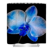 Blue Orchid Bloom Shower Curtain