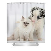 Blue-point Kitten And Border Collie Shower Curtain