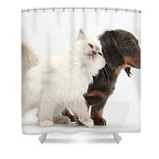 Blue-point Kitten And Dachshund Pup Shower Curtain