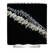 Blue Sawtooth Shrimp On Whip Coral Shower Curtain