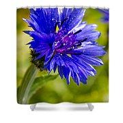 Blue Single Cornflower Shower Curtain