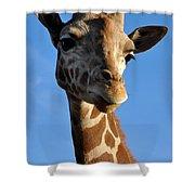 Blue Sky Giraffe Shower Curtain
