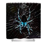 Blue Spider Shower Curtain