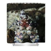 Blue Spotted Harlequin Shrimp, Bali Shower Curtain