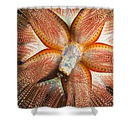 Blue-spotted Sea Urchin IIi Shower Curtain