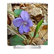 Blue Violet Wildflower - Viola Spp Shower Curtain