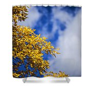 Blue White And Gold Shower Curtain