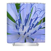 Blue Wild Flower Shower Curtain