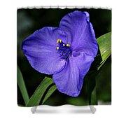 Blue Wildflower 6 Shower Curtain