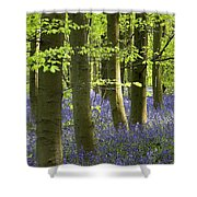 Bluebells In The Woods Shower Curtain