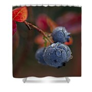 Blueberry Dewdrops Shower Curtain