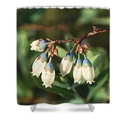 Blueberry Flowers Shower Curtain