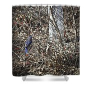 Bluebird In Barberries Squared Shower Curtain